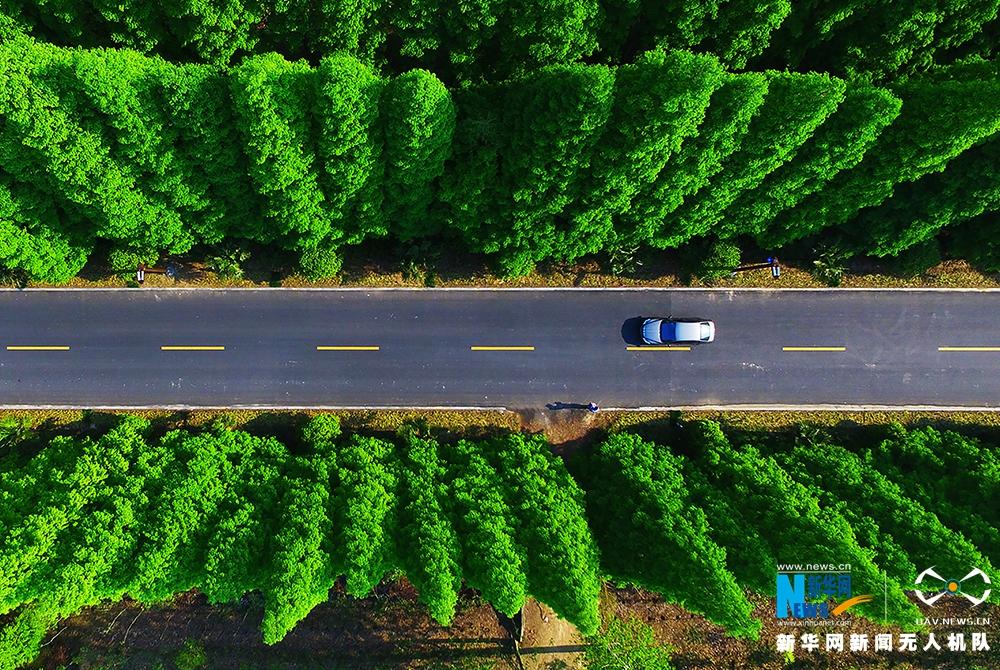 航拍盐城东台黄海森林公园 绿树成荫生机盎然