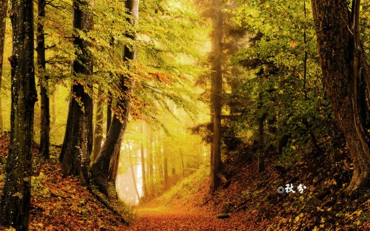 秋分:团圆节前秋期半 从此昼短夜漫漫