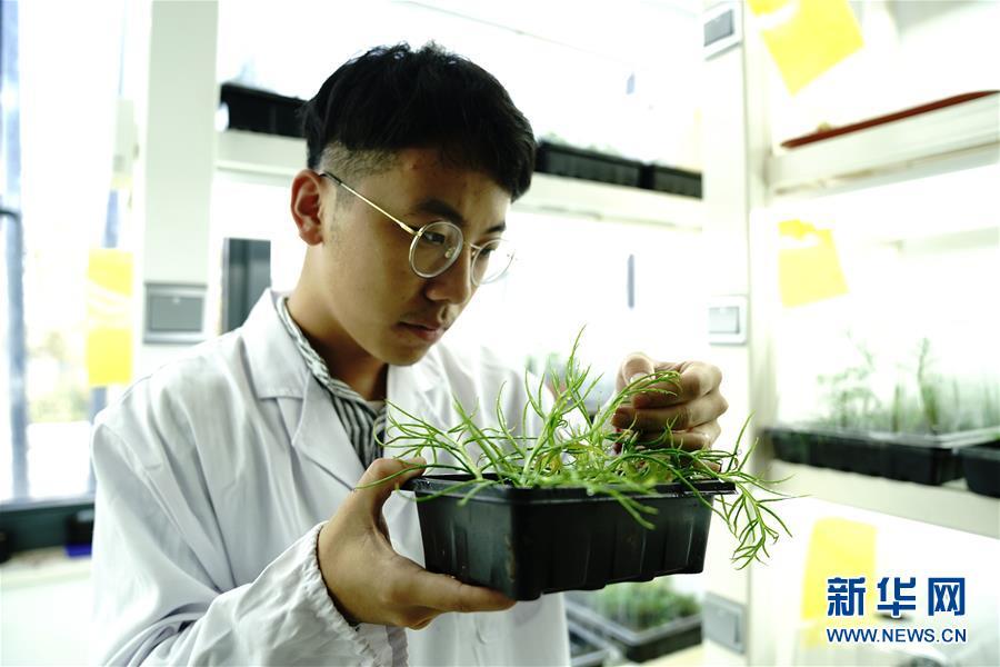 (環境)(1)上海多地發現國家二級重點保護野生植物粗梗水蕨