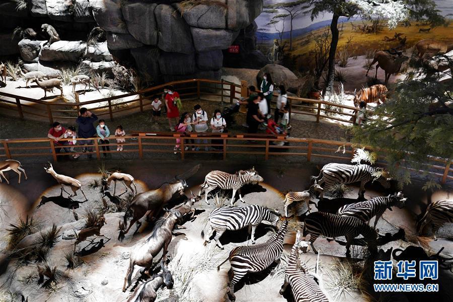 """(社會)(2)上海:自然博物館迎來""""暑期檔"""""""