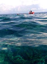 科普:海洋科学家为何要探秘深渊