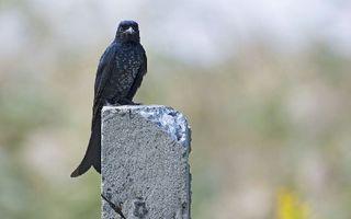 沪上鸟类新访客渐多 看看珍稀鸟儿长啥样