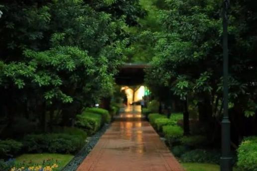 上海这十条清凉小马路 一起去走走
