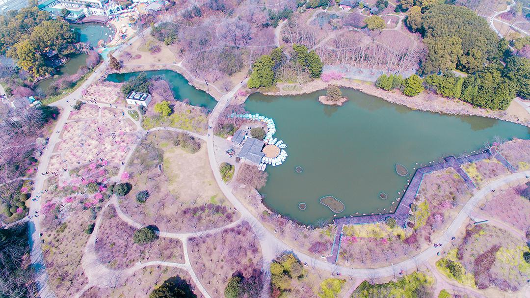 航拍VR:飞瞰上海植物园春色