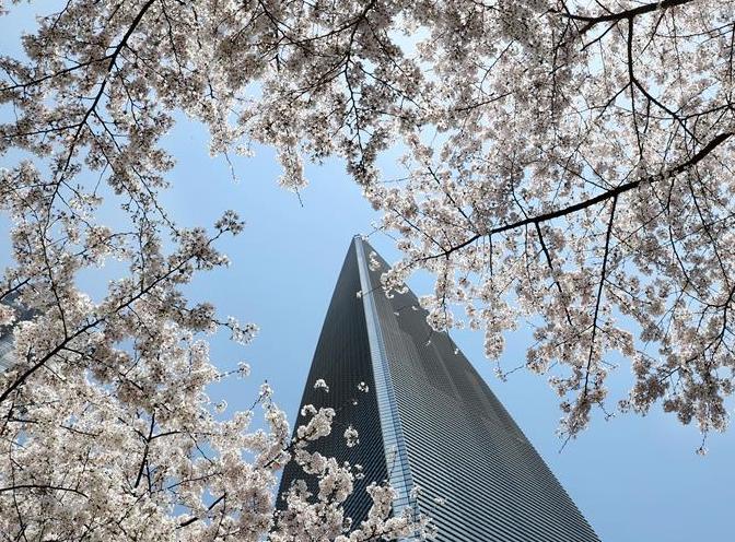 上海陆家嘴:樱花烂漫春光好