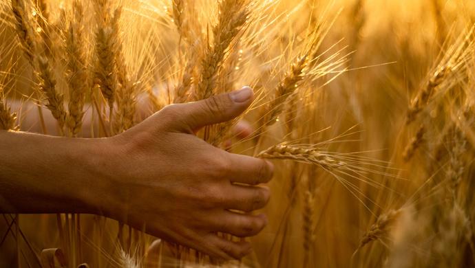 我国将打造优质粮食工程升级版