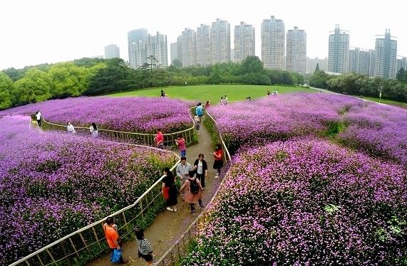 上海正为市民开放更多高品质生态空间