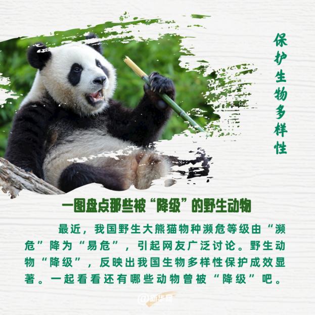 """保护生物多样性 一图盘点那些被""""降级""""的野生动物"""