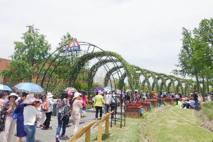 上海国际旅游度假区薰衣草节开园