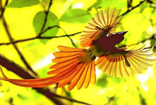 """""""中国最美小鸟""""蓝喉蜂虎及寿带鸟现身"""