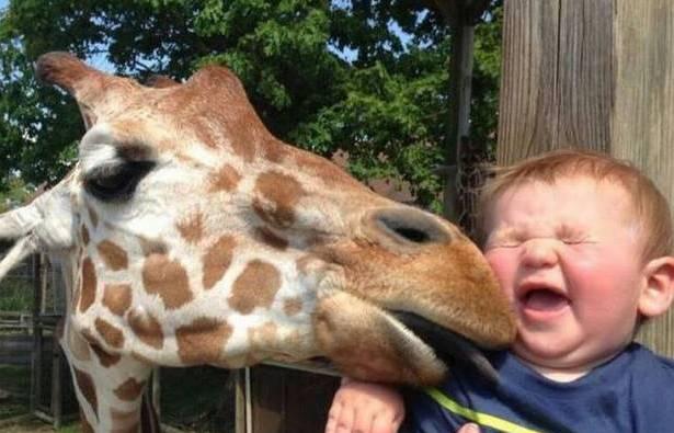 宝宝和动物在一起太甜了!