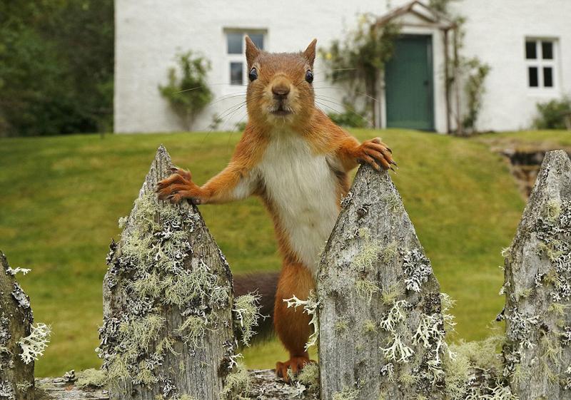 摄影师镜头记录红松鼠四季生活