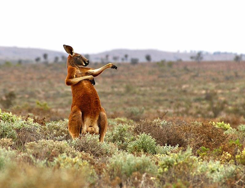 野生动物喜剧摄影搞笑卖萌喜感十足