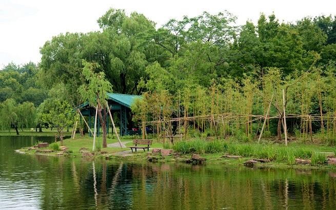 """上海共青森林公园2000余平米""""幽篁新景""""开放"""