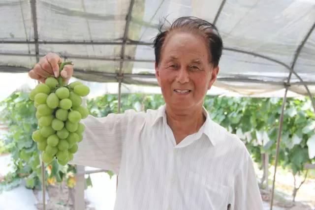 嘉定农业匠人金友祥:想让上海人吃到更香甜的葡萄