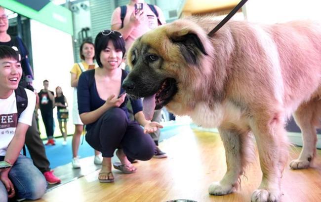 第20届亚洲宠物展在上海开幕