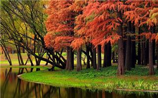上海规划30座郊野公园4座已开园
