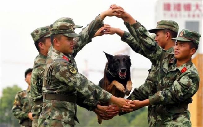 """国庆将至,看看上海的警犬""""阅兵""""练些啥?"""