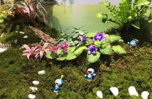 上海植物园唱响蕨类苔藓苦苣苔三重奏