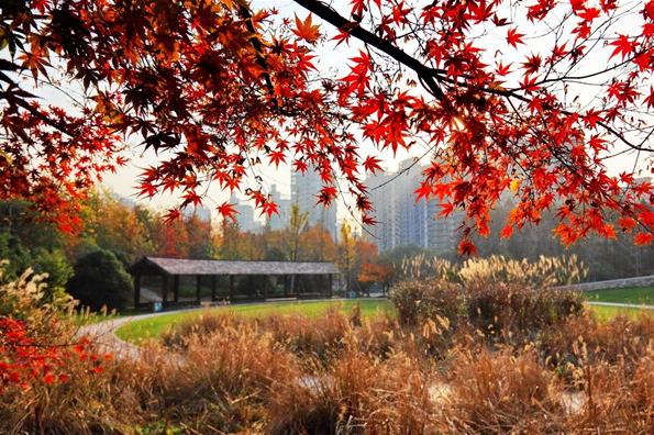 申城迎来最美秋季 赏花观鸟还能踩落叶