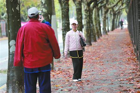 悬铃木、银杏、栾树、无患子 上海的秋色去哪找