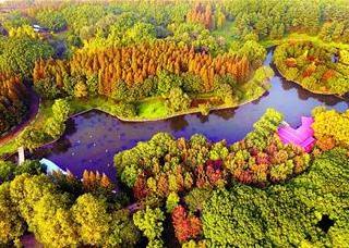 五彩森林 秋韵十足