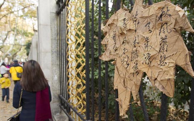 上海:梧桐落叶缤纷引游人