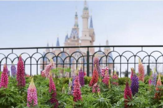 满园春色关不住!迪士尼春季赏花攻略新鲜出炉