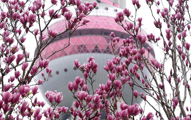 上海春来早