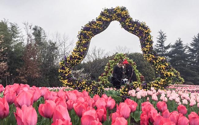 2018上海(国际)花展开幕在即