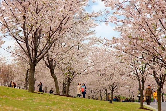 春分:申城将迎来一波升温 各大公园花展美如画