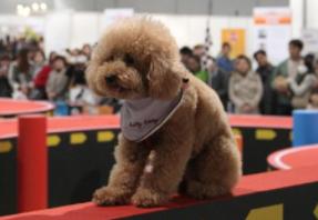 众多名猫名犬将参展第七届上海国际宠博会