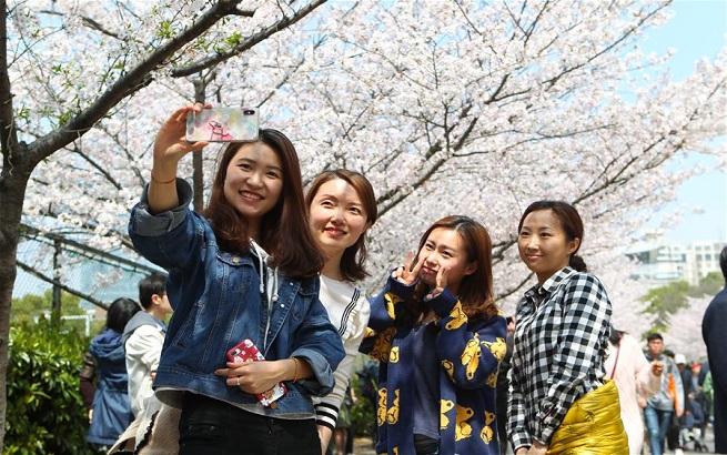 上海:校园樱花盛放