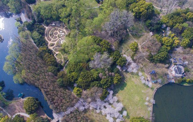 第十七届都市森林百花展将在共青森林公园举行