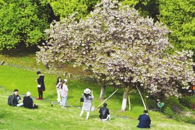 沪市民踏青郊游感受春之萌动 各公园迎大客流