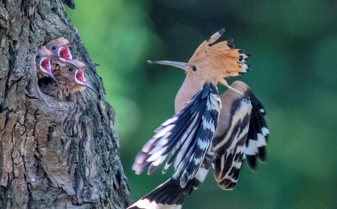 爱鸟、知鸟、护鸟 走近沪上拍鸟人