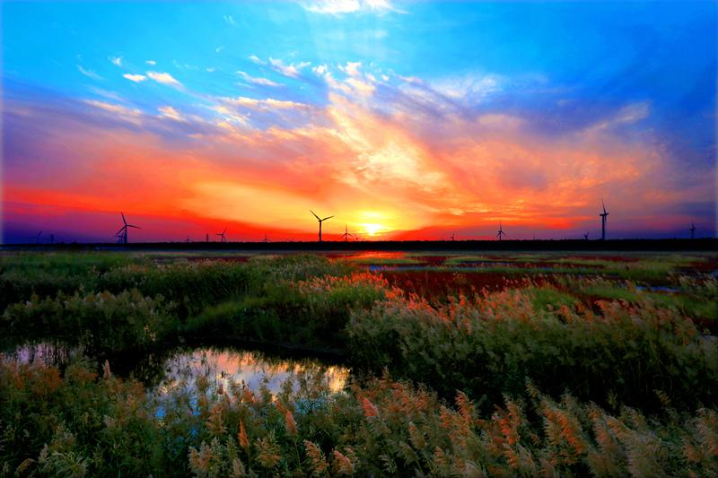 高清视频:黄海国家森林公园