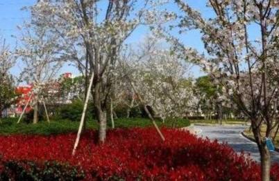 徐汇超大绿地将建成 居民出门就有好风景