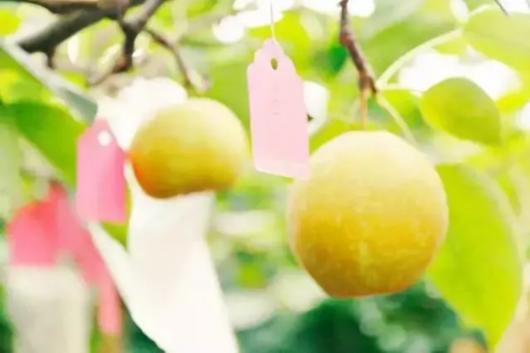 上海本土时令水果全上线,这个夏天好香甜