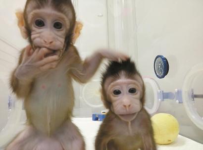 探索生命科学前沿 彰显上海科研力量