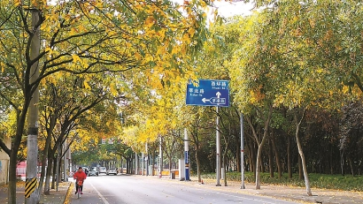 上海29条落叶景观道路今起陆续开始保留落叶
