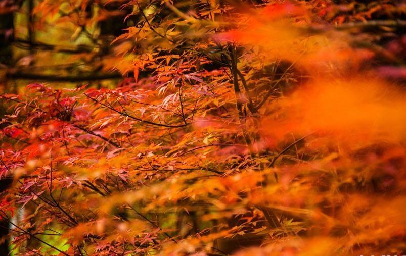 你在北方的冬日里裹棉袄,我在南方的暖阳里赏秋色