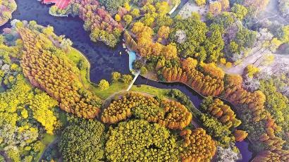 五彩森林装点秋色