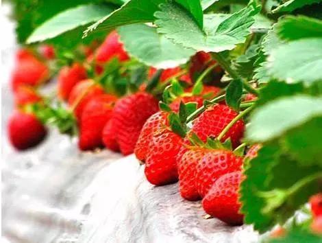 上海获国家级地理标志的农产品增至14种!尝过几个?