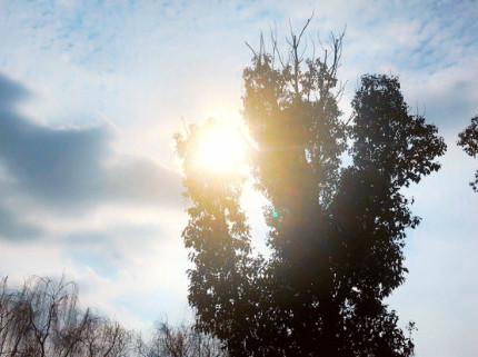 申城未来几日都是好天气 今天郊区气温跌破冰点