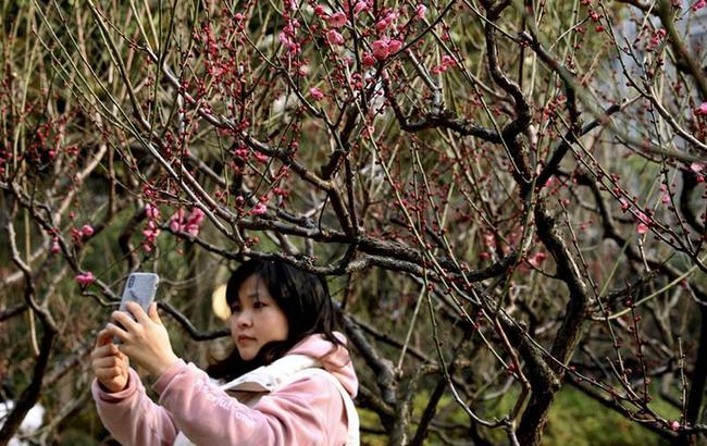上海:梅花引遊人