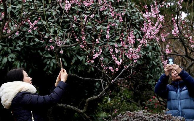 上海:新春赏花游园乐