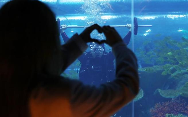 潜入水中为爱负重