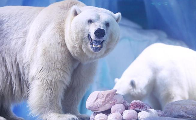 北极熊欢乐度元宵