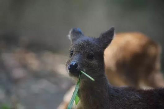 耍起来 上海动物园今年将开30000平方米新园区
